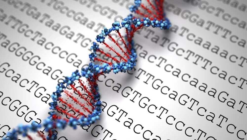 Genotype types