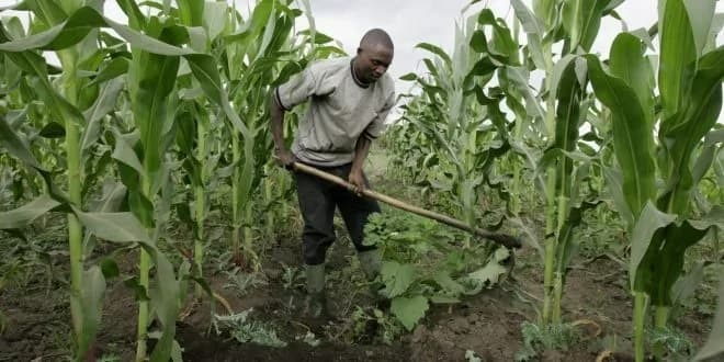 Federal Government agric loan application and requirements