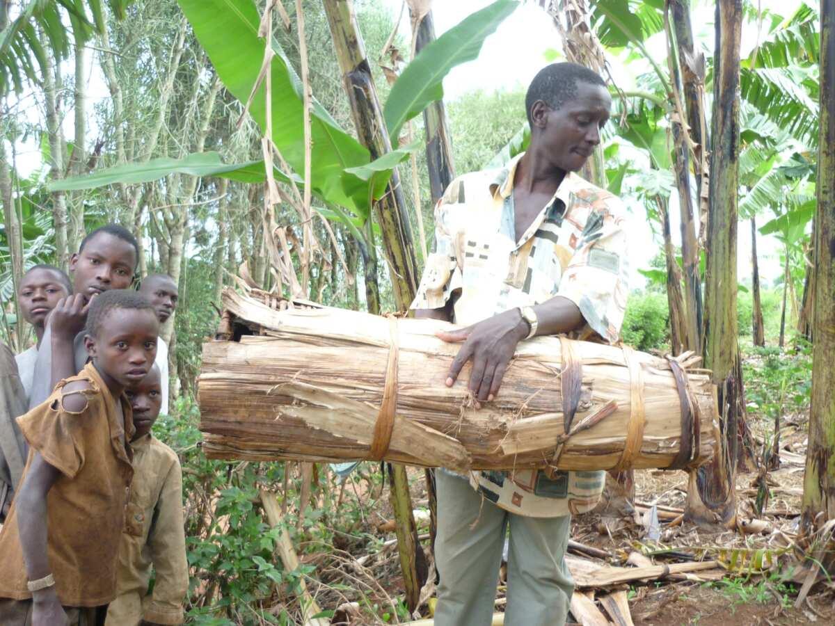 Traditional beekeeping in Nigeria vs modern methods