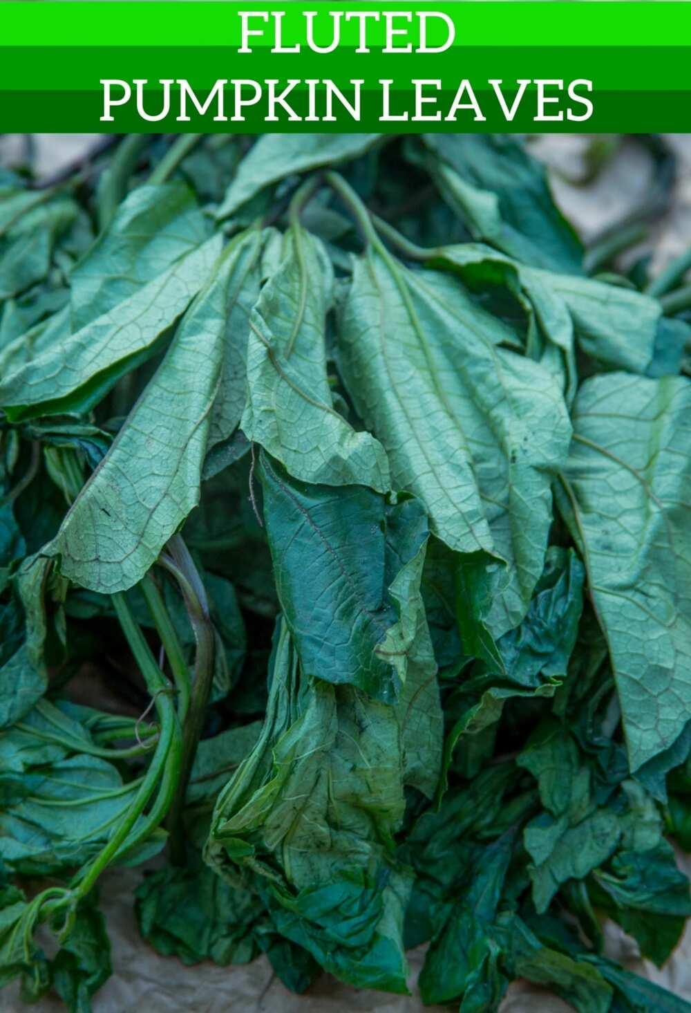 Health benefits of ugu leaves
