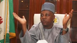 Seven APC chiefs allegedly planning to destroy Borno's ex-governor Shettima ahead of 2023 - Group reveals how