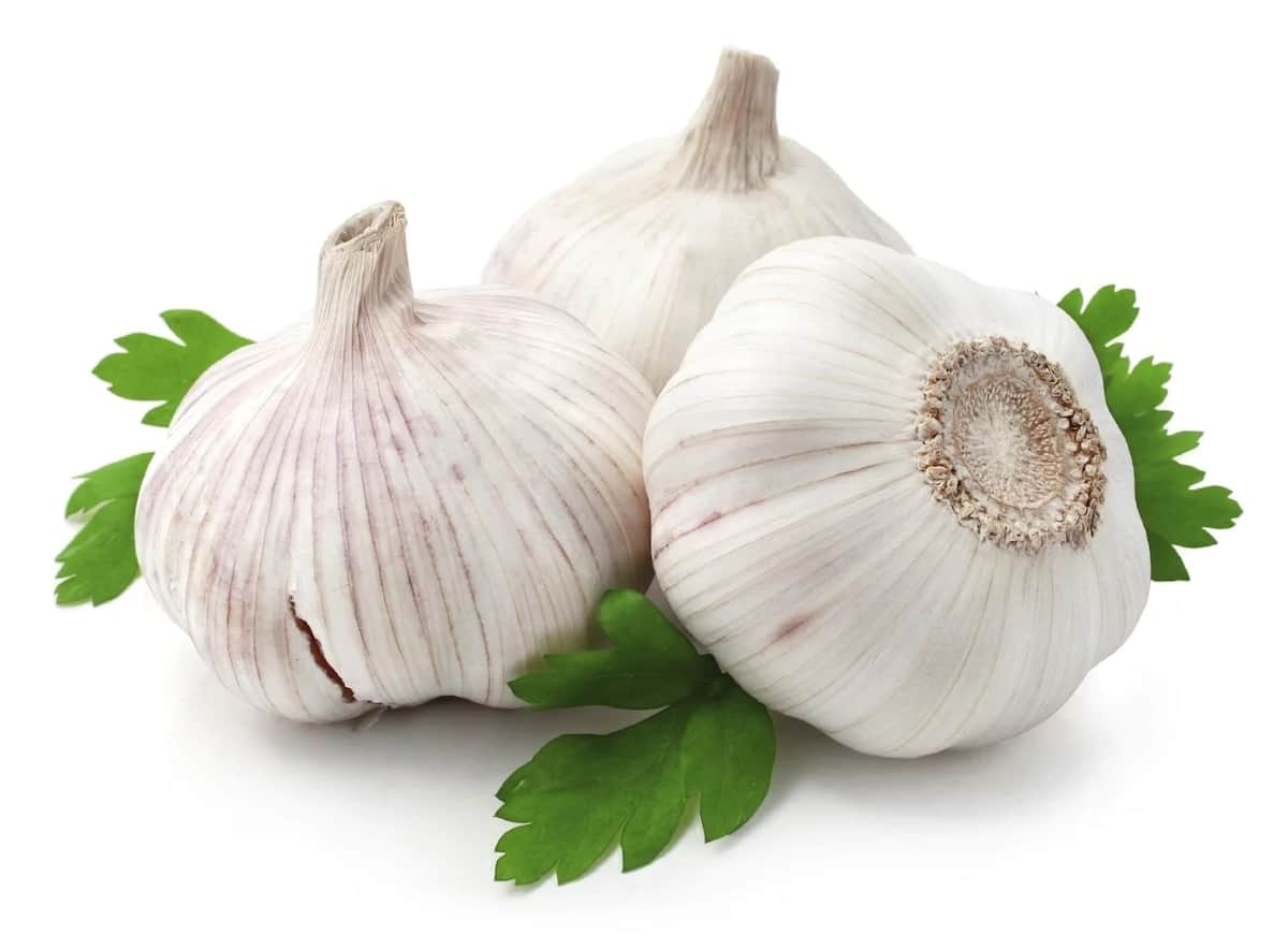 Garlic and fertility: Can it help? ▷ Legit ng