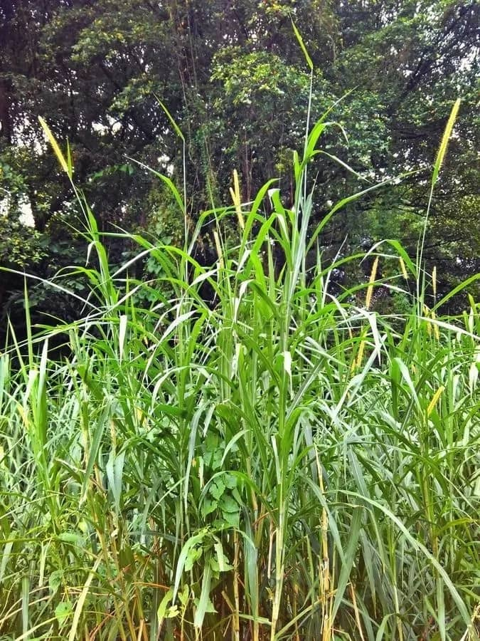 Types Of Weeds In Nigeria And Their Uses Updated Legit Ng